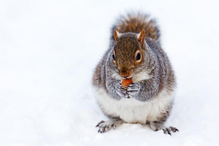 animal-brown-cold-creature-87433.jpeg